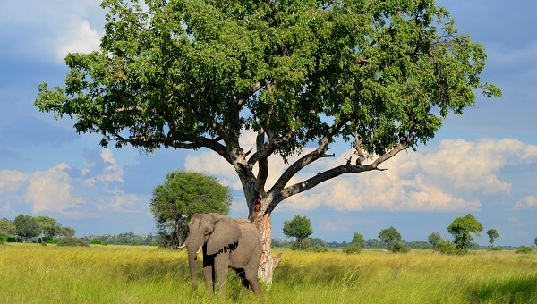 Africa Best Safaris Destinations